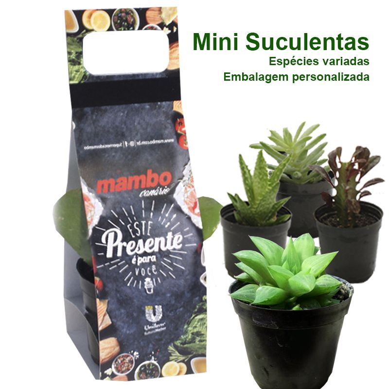Mini Suculenta Alça - Impressão Colorida - Ref.0014789