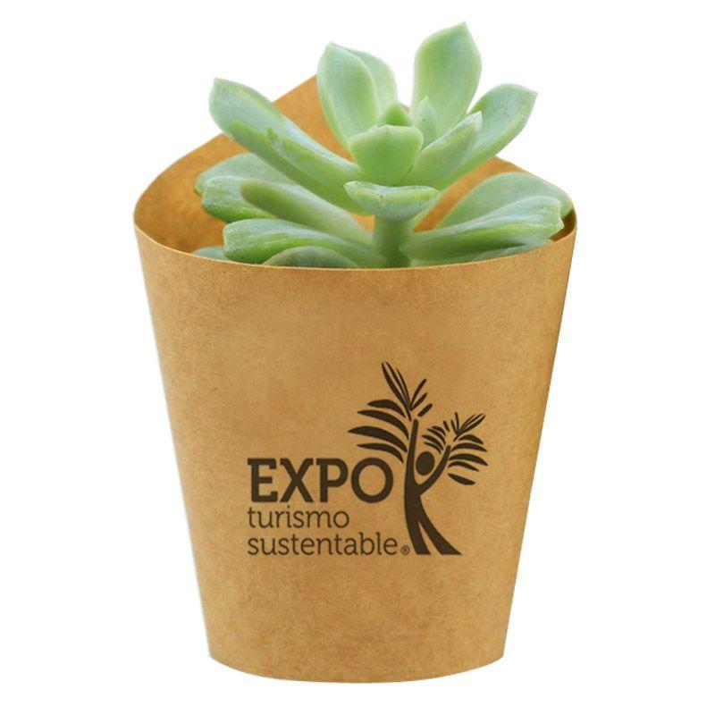 Mini Suculenta no Vaso com Kraft - Ref.0014780