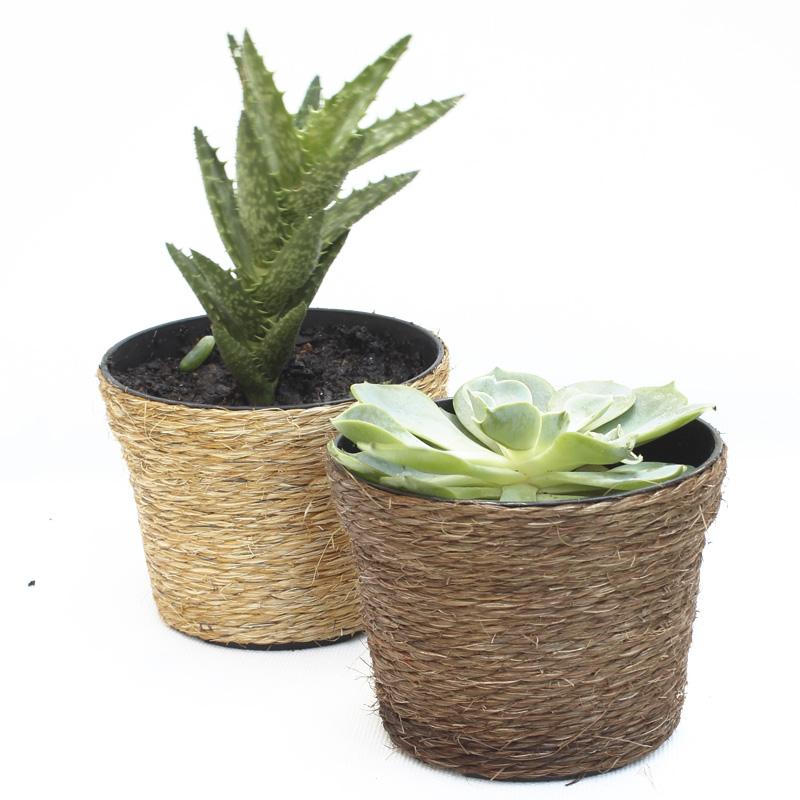 Suculenta Vaso de Sizal P Ref.0014770