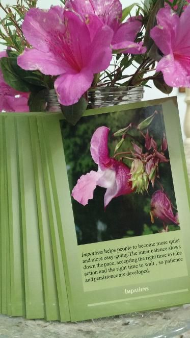 Bach Flower Cards in English
