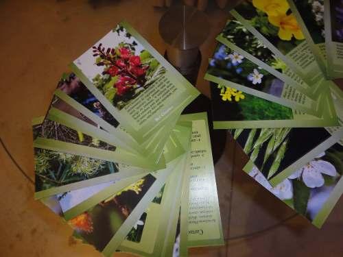 Cards com Texto Florais de Bach