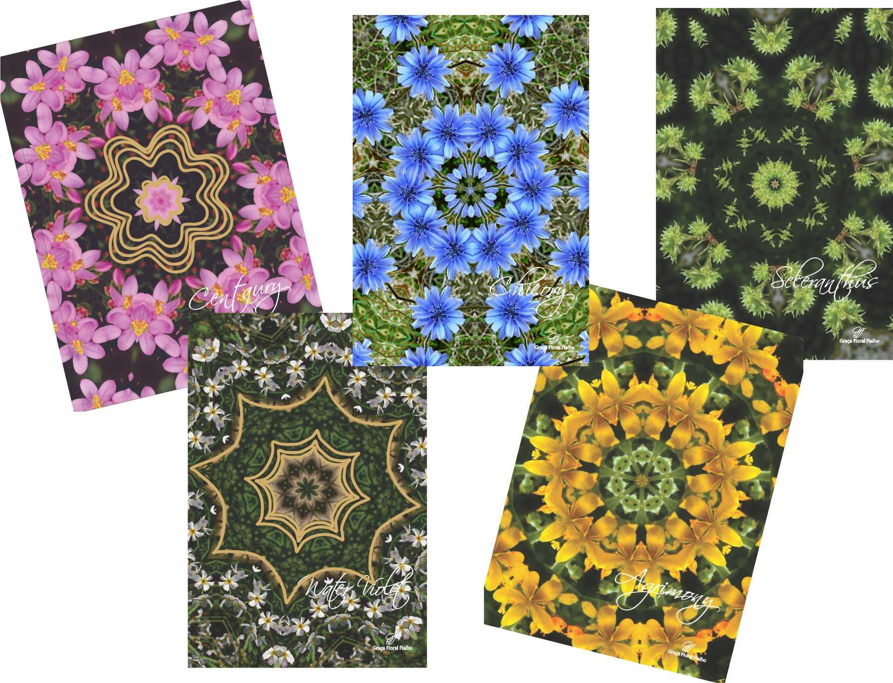 Cards Mandalas dos Doze Tipos Florais de Bach