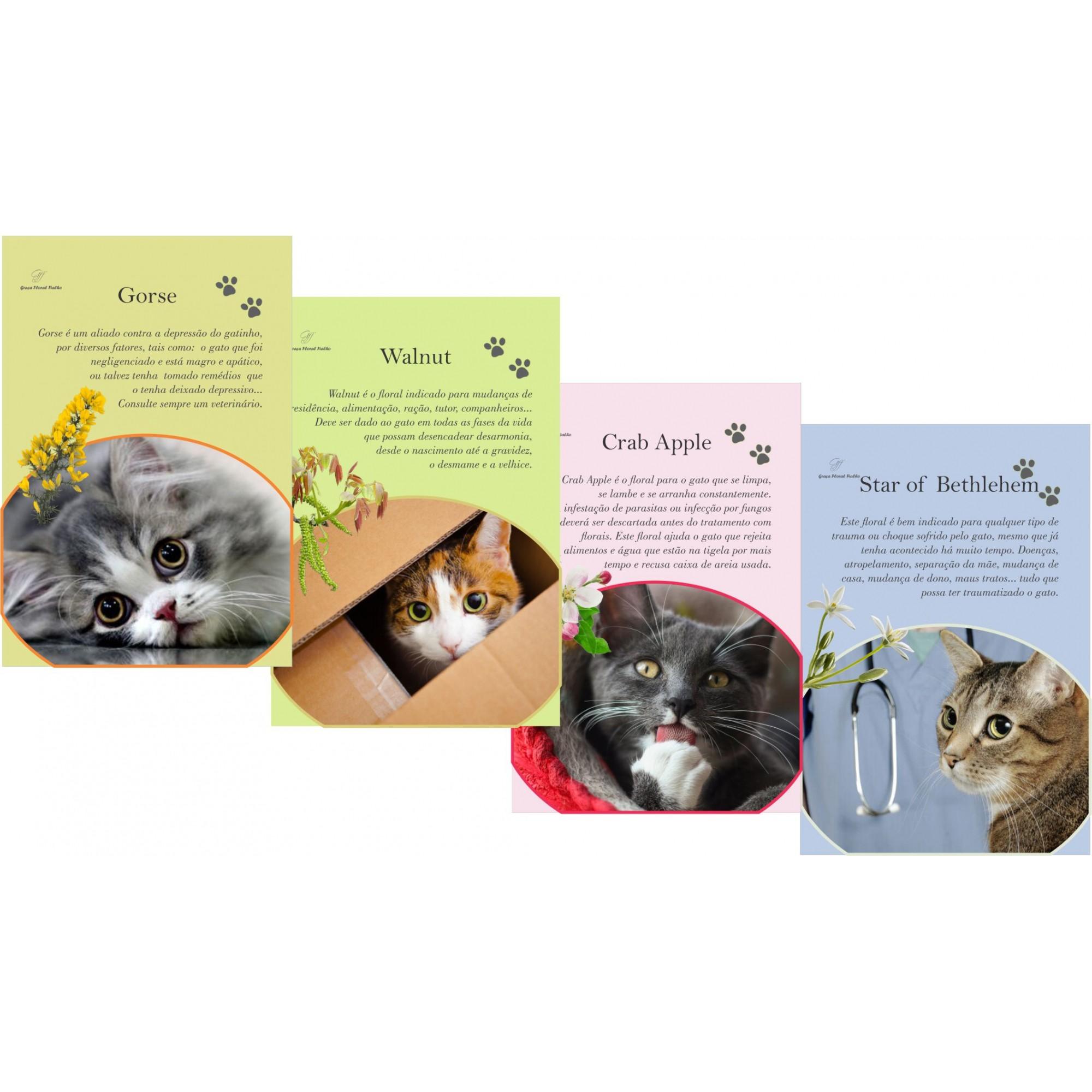 Cards Principais Florais de Bach para Gatos