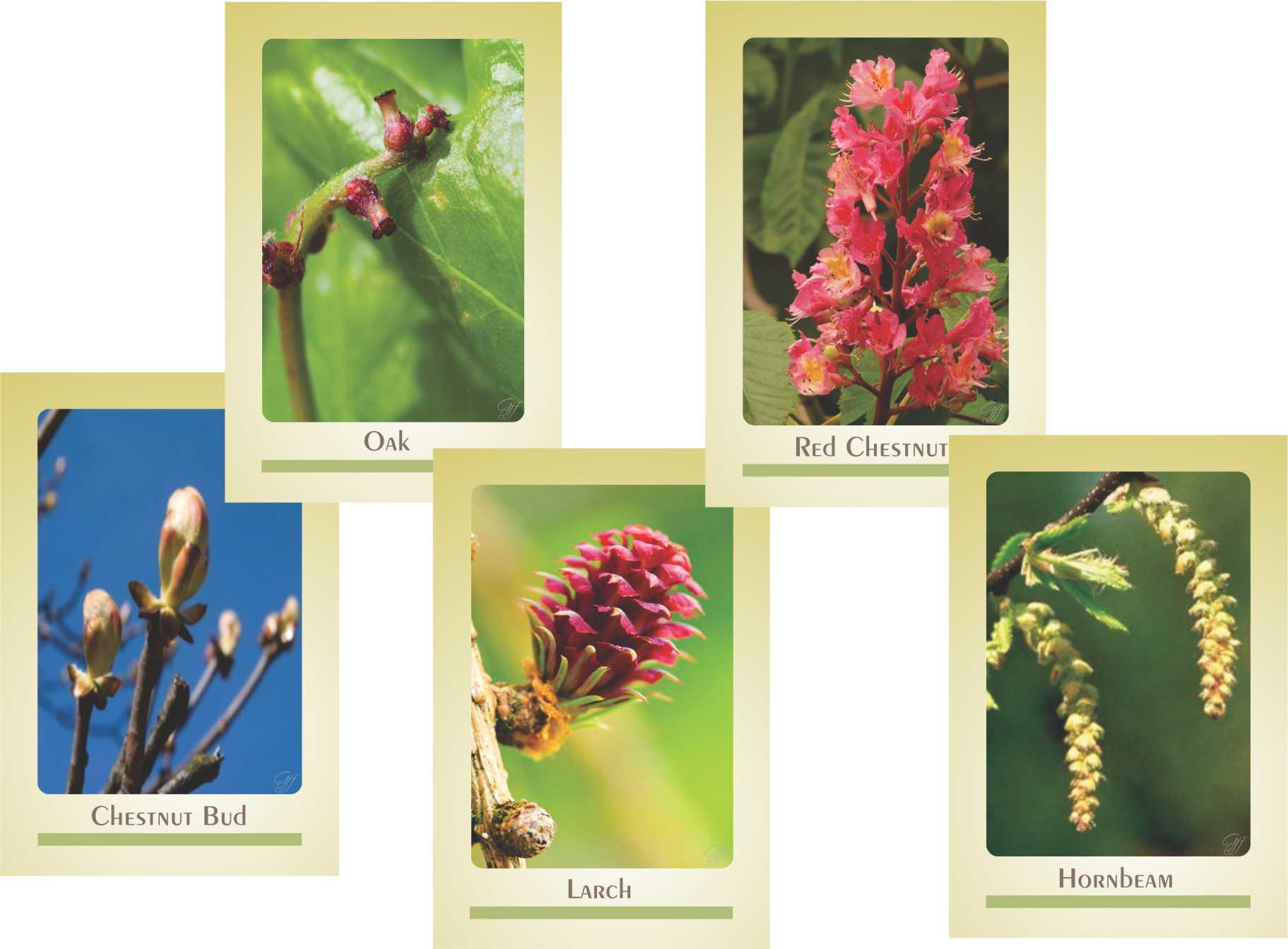 Cards sem Texto - Belas Imagens Florais de Bach