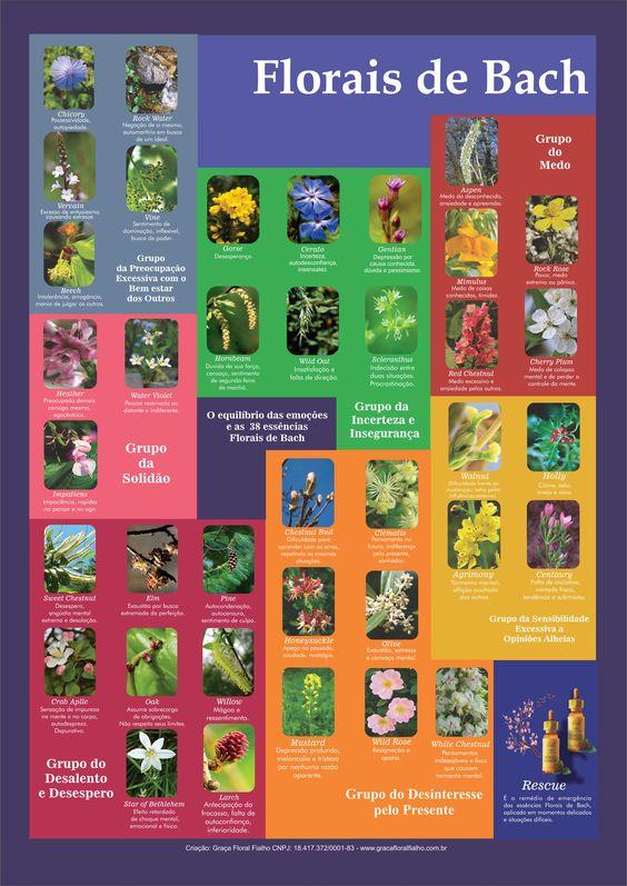 Poster 006 - Florais de Bach
