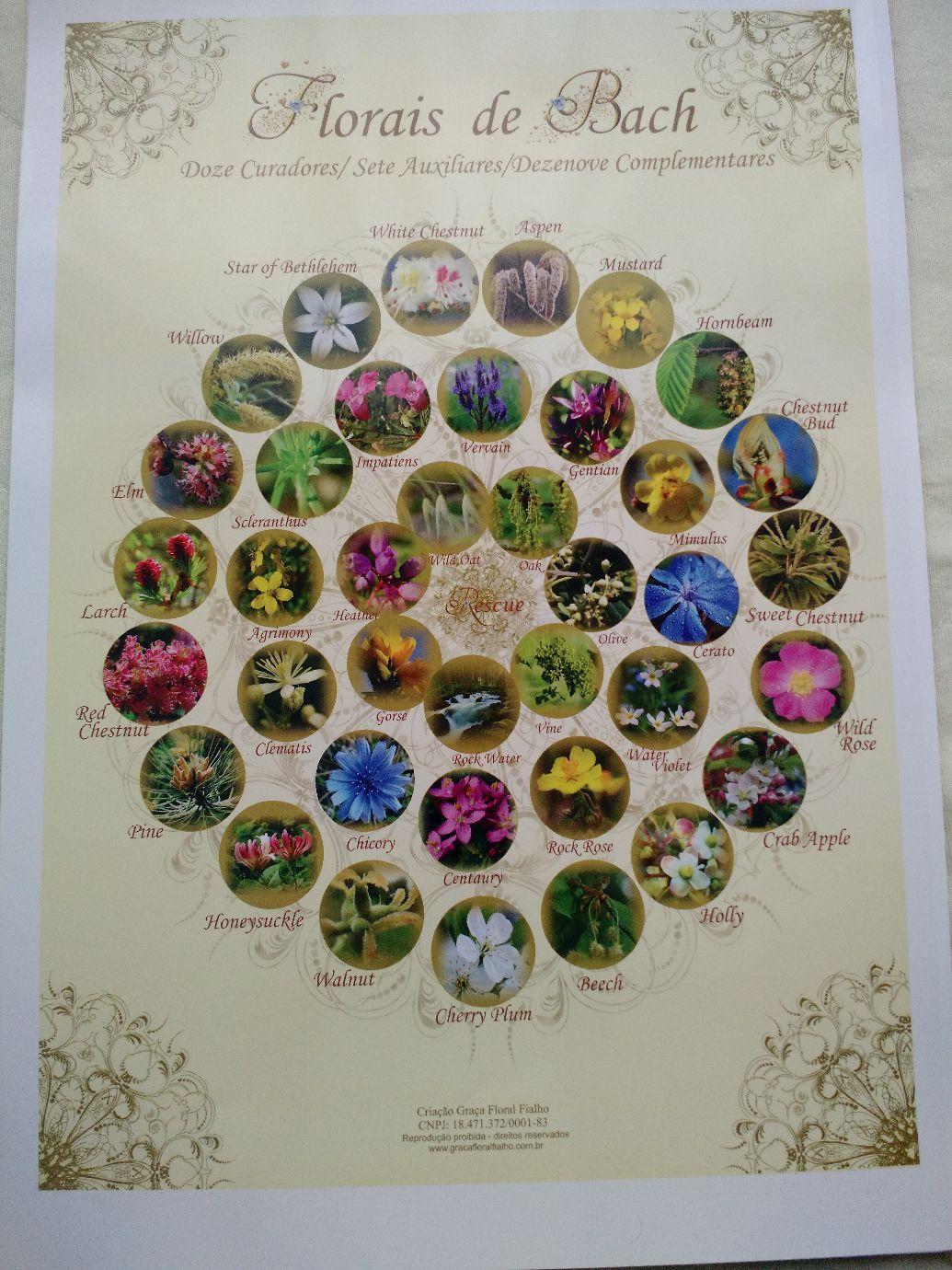 Poster 12 Curadores, 7 Auxiliares e 19 Complementares