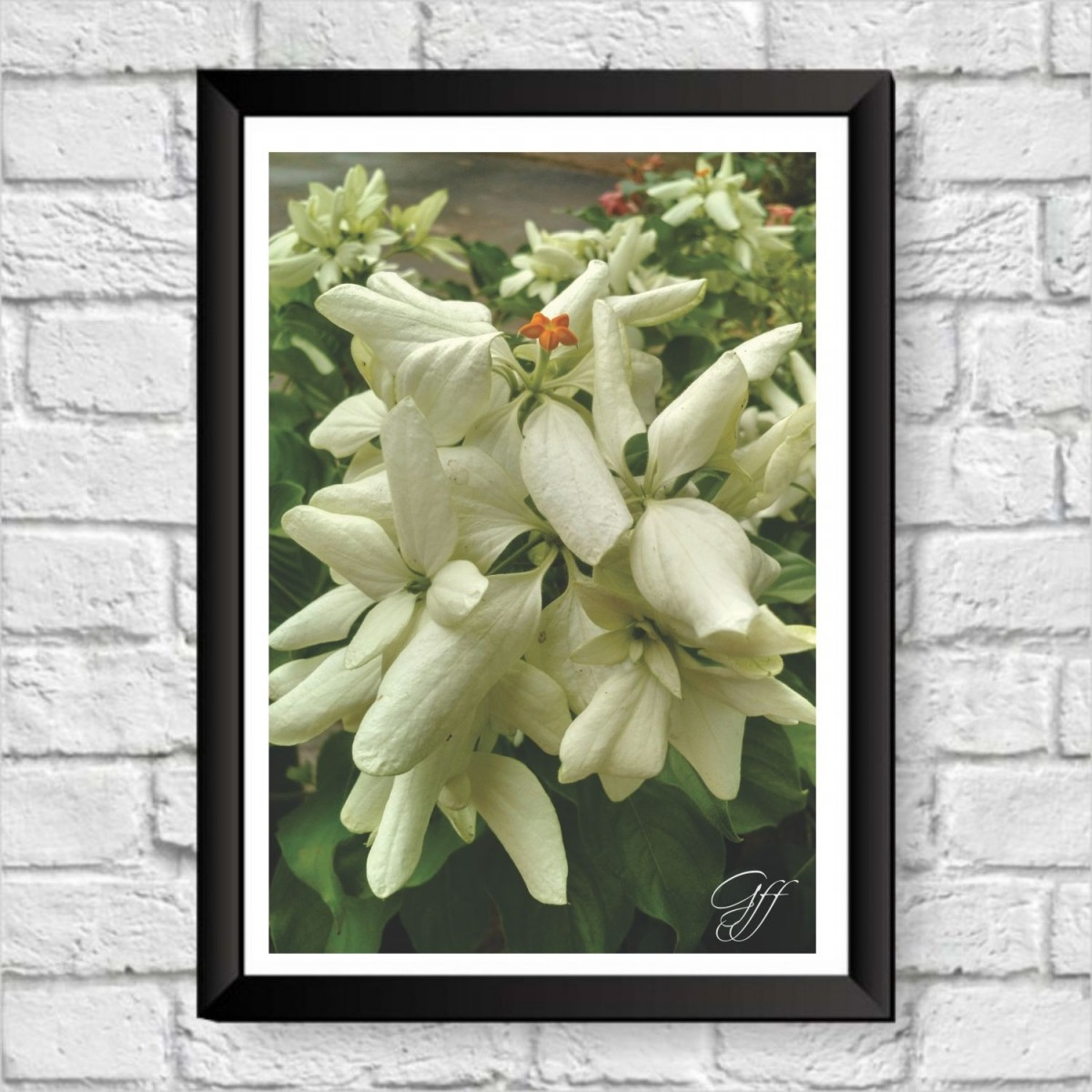Poster Flores Brancas