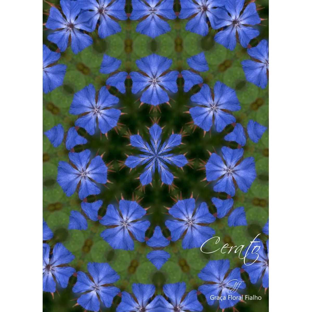 Poster Mandala Cerato