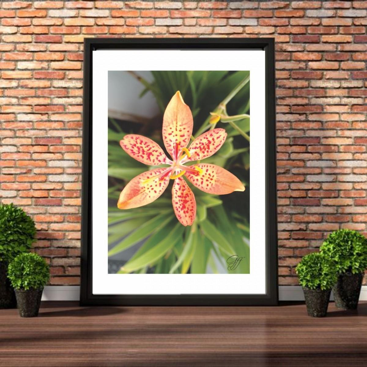 Poster Orquídea de Jardim