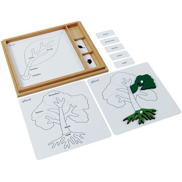 Atividades para Quebra-Cabeças de Botânica (em Inglês)