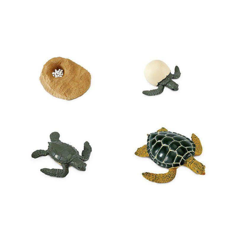 Ciclo de Vida da Tartaruga
