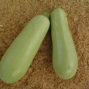 Semente Abobrinha Marzouka Híbrida (Seminis) - 1.000 sementes