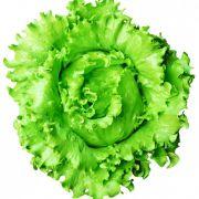 Semente Alface Lucy Brown (Seminis) - 5.000 sementes