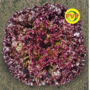 Semente Alface Pira Roxa (63) (TSV) - 1.000 sementes
