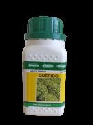Semente Alface Querido (Vilmorin) - 7.500 sementes
