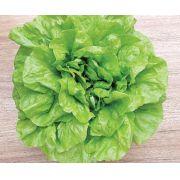 Semente Alface Regina 500 (Topseed Premium) - 2.000 sementes