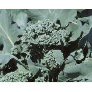 Semente Brócoli Ramoso Piracicaba (Horticeres) - 100 gramas