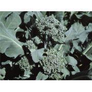 Semente Brócoli Ramoso Santana (Horticeres) - 100 gramas