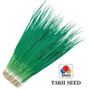 Semente Cebolinha Híbrida Konatsu Hossonegui (Takii Seed) - 100 gramas