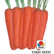 Semente Cenoura New Kuroda (Takii Seed) - 300 gramas