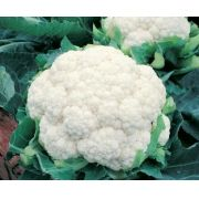 Semente Couve-flor Híbrida Alpina (Topseed Premium) - 1.000 sementes