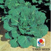 Semente Couve Manteiga Híbrida Hi-Crop (Takii Seed) - 10 gramas