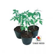 Semente de Porta Enxerto Híbrido Green Power (Para Tomate) (Takii Seeds) - 1.000 sementes