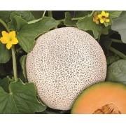 Semente Melão Híbrido Bazuca (Topseed Premium) - 1.000 sementes