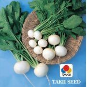Semente Nabo Redondo Híbrido Taibyo Hikari (Takii Seed) - 10 gramas