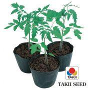Semente Porta-enxerto Tomate Híbrido Guardião (Takii Seed) - 1.000 sementes