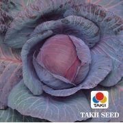 Semente Repolho Roxo Híbrido Ruby Queen (Takii Seed) - 2.500 sementes