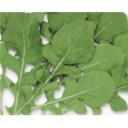 Semente Rúcula Selecta (Horticeres) - 100 gramas