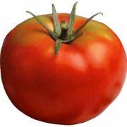 Semente Tomate Híbrido Olympo (Seminis) - 1.000 sementes
