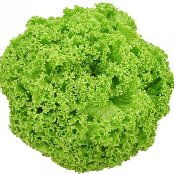 Semente Alface Amanda (Seminis) - 5.000 sementes
