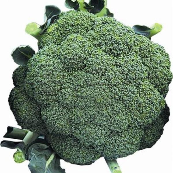 Semente Brócoli Legacy Híbrido (Seminis) - 1.000 sementes