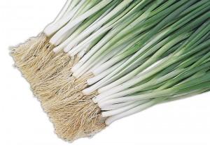Semente Cebolinha Ibirité (Horticeres) - 100 gramas