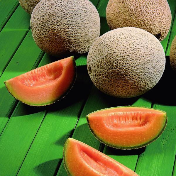 Semente Melão Híbrido Hy-Mark (Seminis) - 5.000 sementes