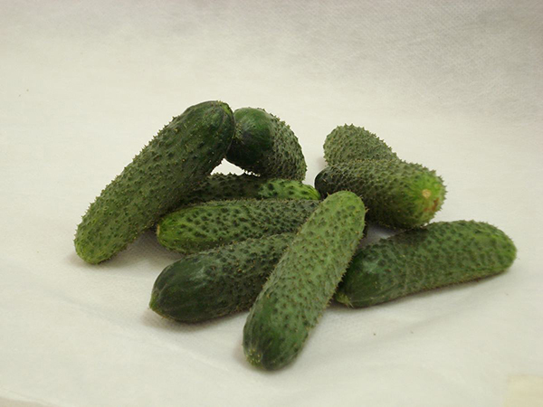 Semente Pepino Híbrido Kybria (Topseed Premium) - 1.000 sementes