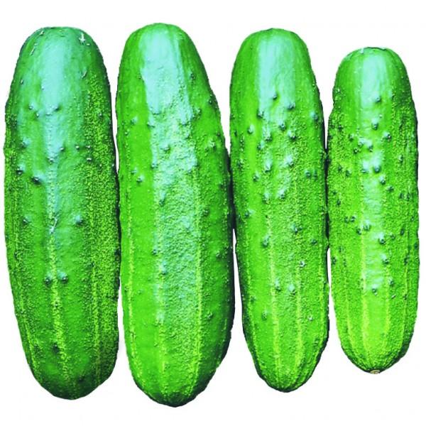 Semente Pepino Híbrido Primepack Plus (Seminis) - 3.000 sementes