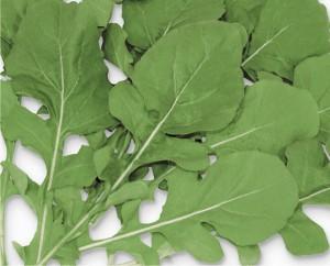 Semente Rúcula Selecta (Horticeres) - 500 gramas