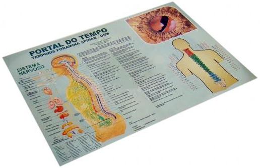Mapa A3 Iridologia Terapia Portal do Tempo (Cronorischio)