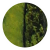 Baobá (verde com preto)