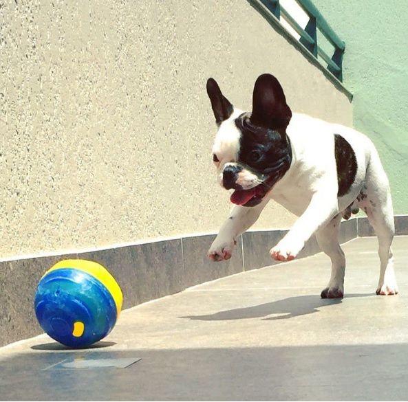 PET BALL PET GAMES