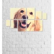 Quadro Placas Cachorro 02 - 8 peças