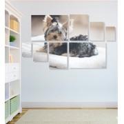 Quadro Placas Cachorro 3 - 8 peças