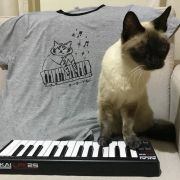 Gatinho do teclado キーボーねこ