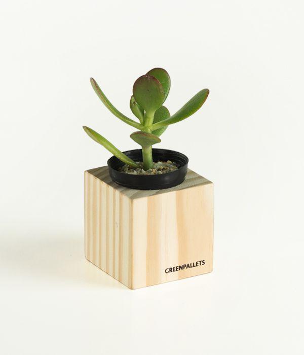 Mini cachepot p/ Suculentas PP - Natural  - Greenpallets