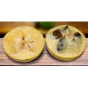 Guapeva ou Fruta do Imperador - Chrysophyllum imperiale