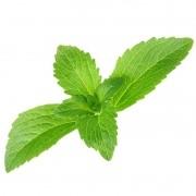 Muda de Stévia - Adoçante Natural - Stevia Rebaudiana