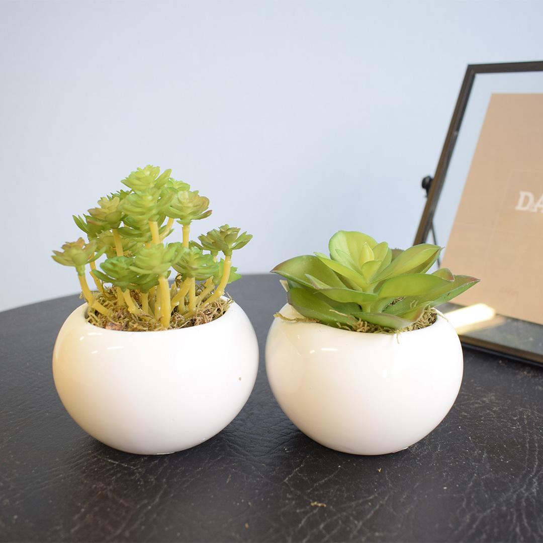Conjunto de Dois Arranjos de Mini Suculentas no Vaso Branco |Linha Permanente Formosinha
